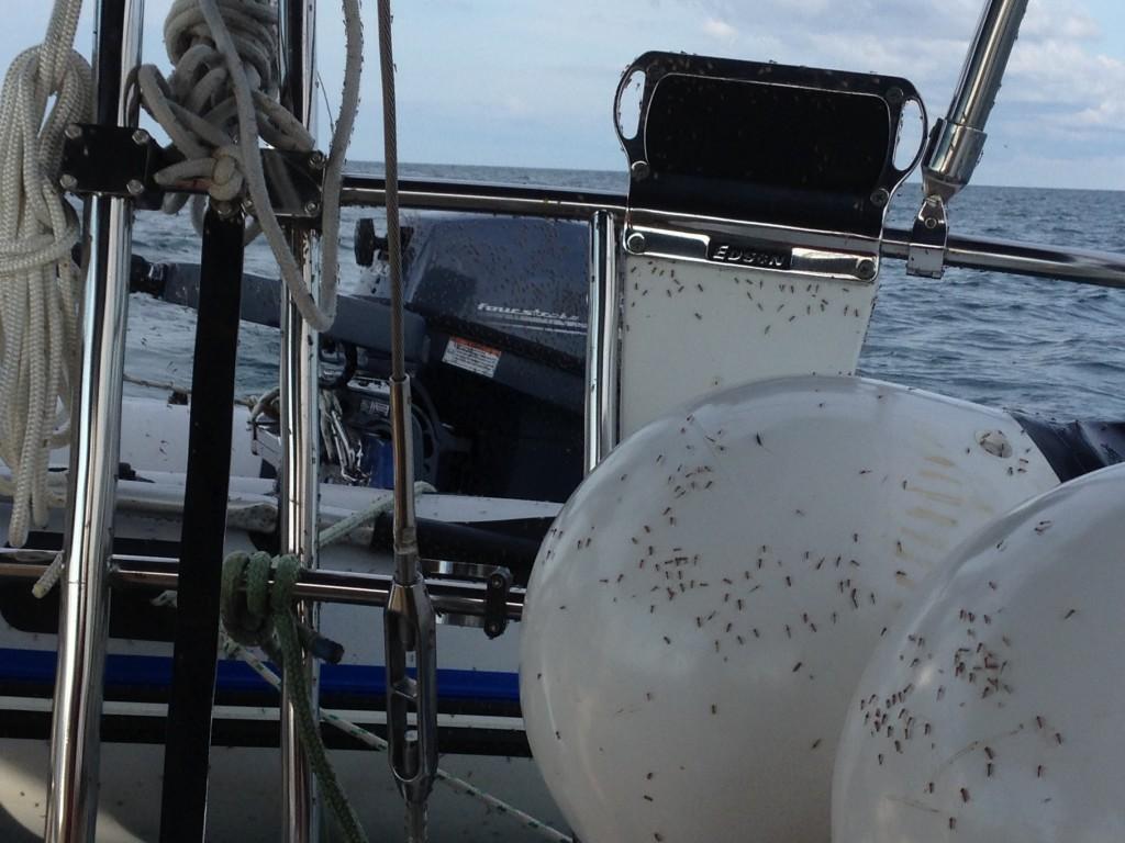Bugs on board